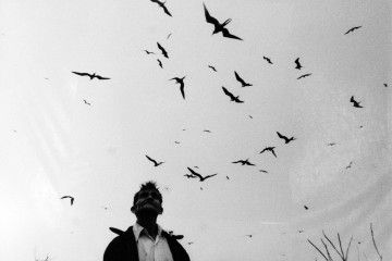 Serie Pájaros. Graciela Iturbide