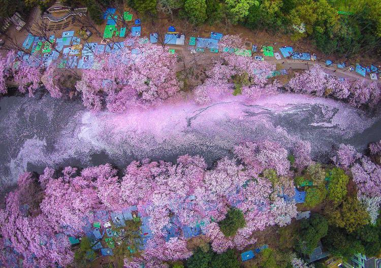 Lago rosado en Inokashira. Danilo Dungo