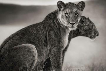 Fotografía de animales. Nick Brandt
