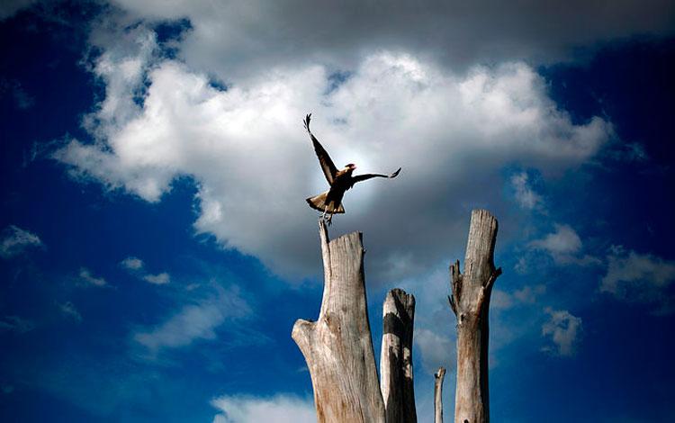Ave sobre un árbol