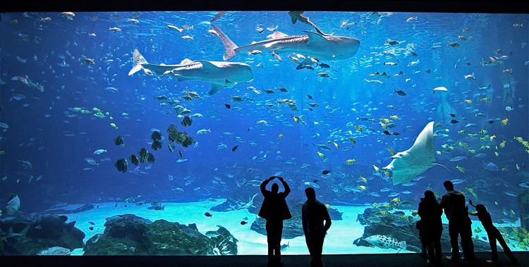 personas la gran pecera del acuario de georgia