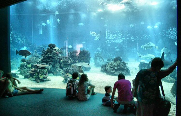 Visitantes viendo el acuario de Lisboa