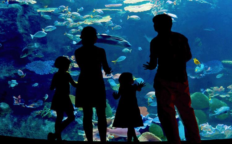 Familia admirando las especies del acuario de Veracruz