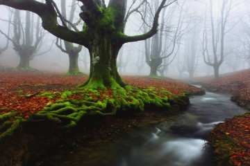 Bosque con río y arboles