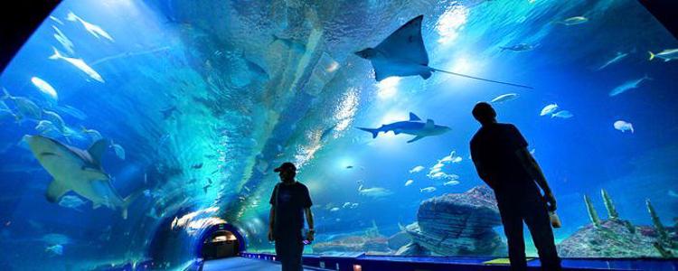Túnel dentro del acuario de El Oceanogràfic en Valencia
