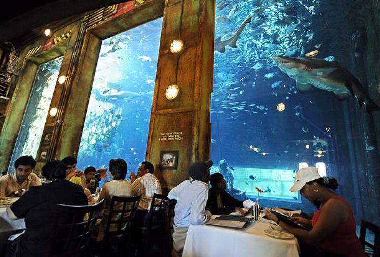 acuario con restaurante en ushaka marine world en sudfrica