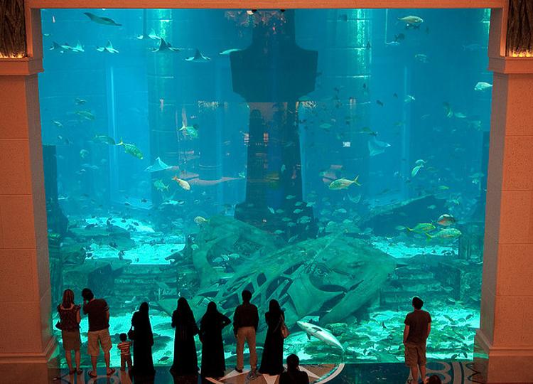 uno de los tanques acuticos del acuario aqwa en australia