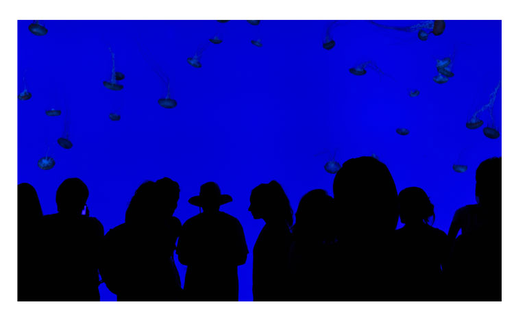 Scott Webb el azul