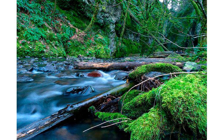 Río en la Garganta de Oneonta