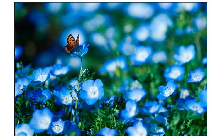 Yumi flores de color el azul con mariposa
