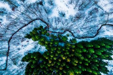 Bosque de Kalbyris en Dinamarca