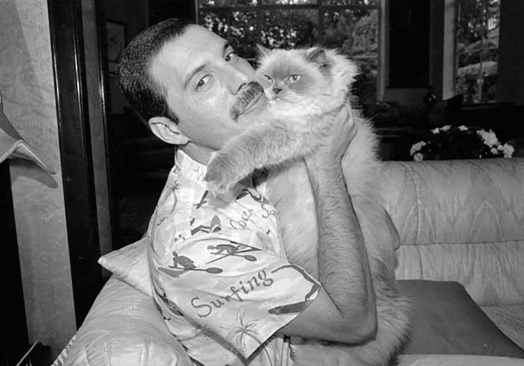 Freddie Mercury con su gato Tiffany