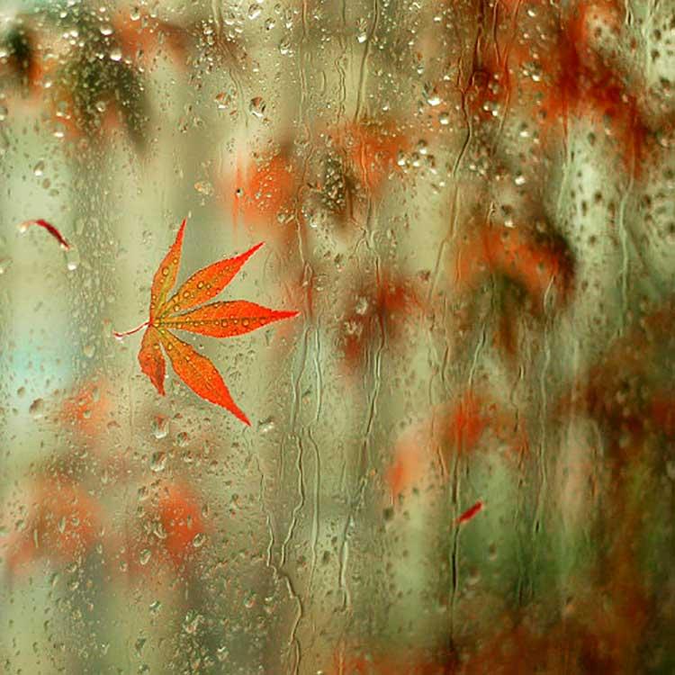 Hojas y lluvia en la ventana