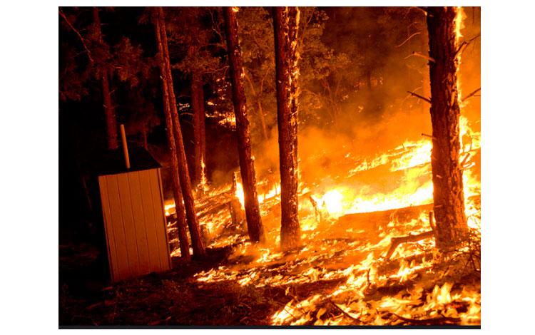 Bosques abrasados por el fuego
