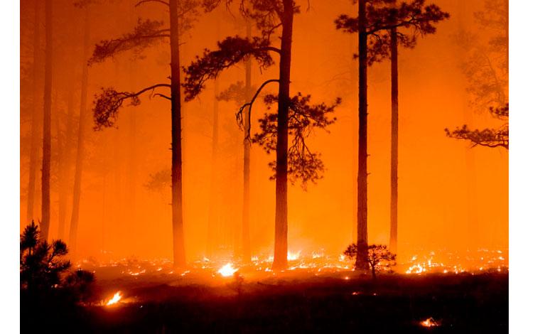 Bosque en llamas