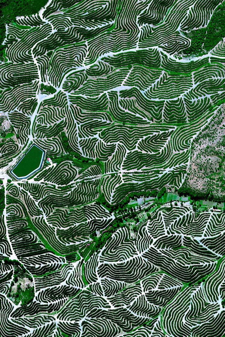 Tierras con árboles frutales de Huelva