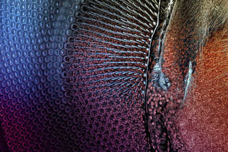 Fotografía microscópica de un caballito del diablo