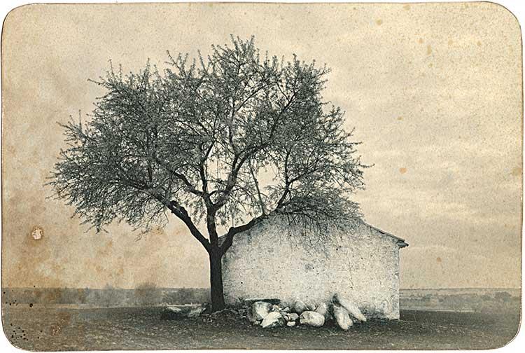 Casa junto a árbol