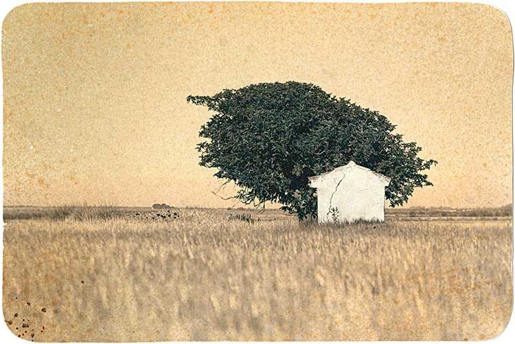 Casa y árbol a lo lejos
