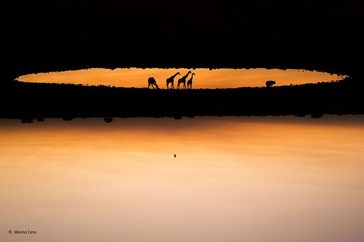Sombras de animales africanos