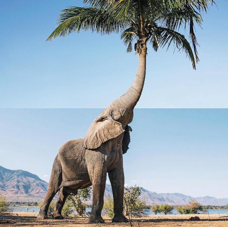 elefante y palmera