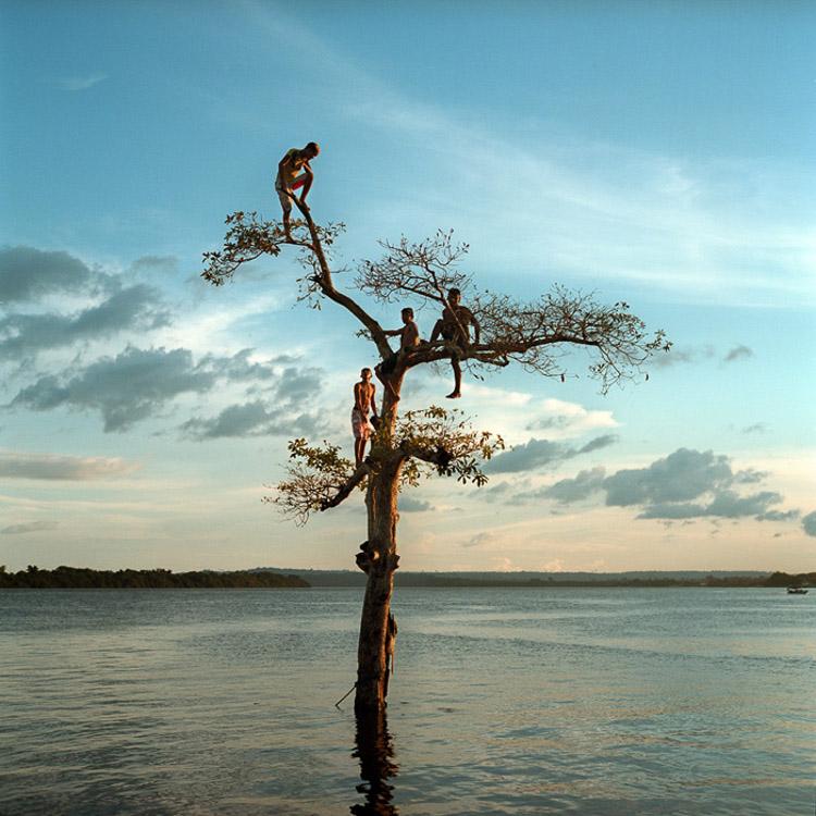 Grupo de chicos subidos a un árbol