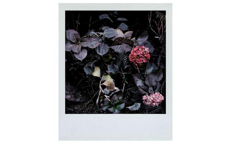 Arno Fischer | Naturaleza Muerta