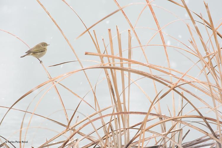 Pájaro sobre rama de árbol