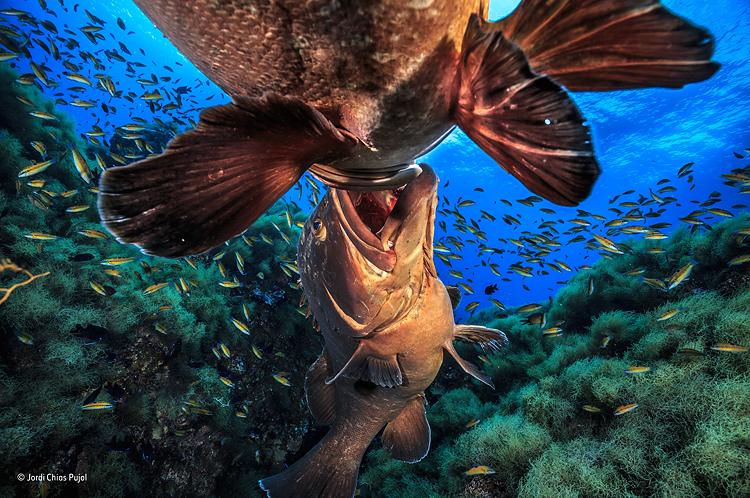 Reptil comiendo en el agua