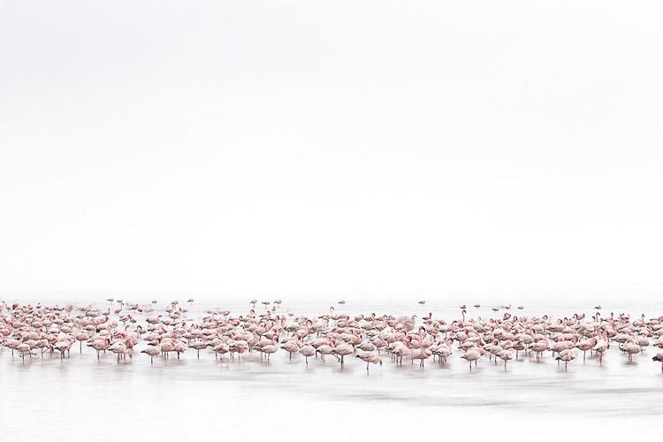 Alessandra Meniconzi. Ganador de la categoría Wildlife