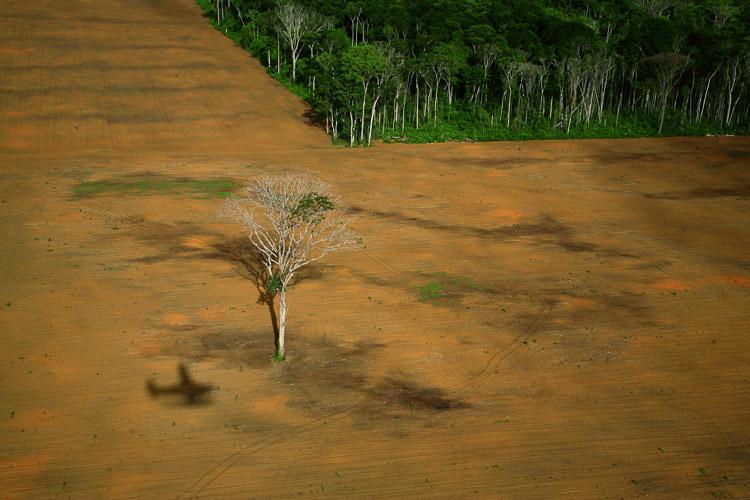 Árbol tras un desastre natural