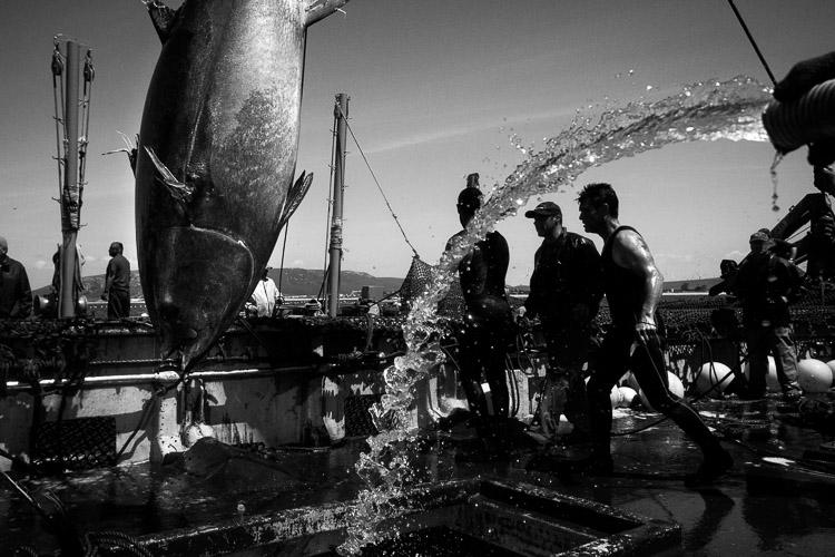 Barco pesquero en blanco y negro