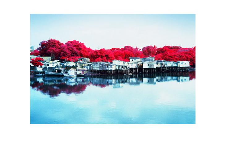 Árboles rojos sobre río