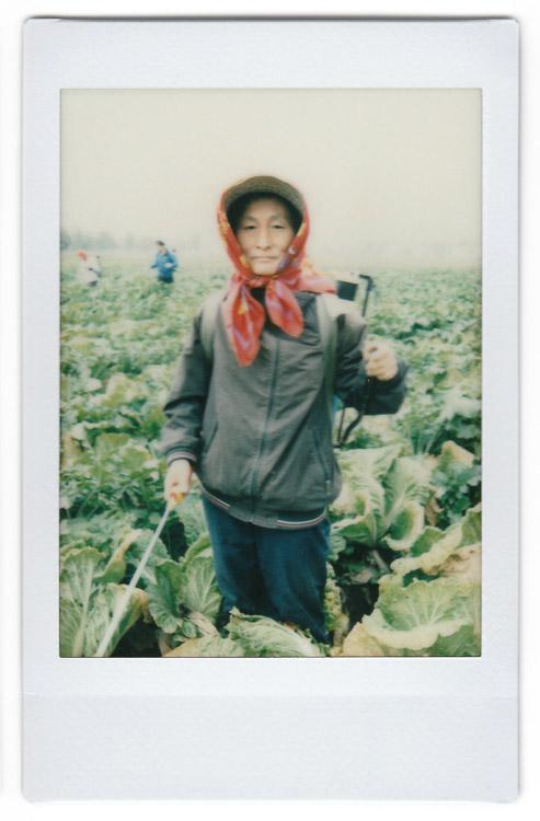 Jo Myong-sim - campos de Corea del Norte