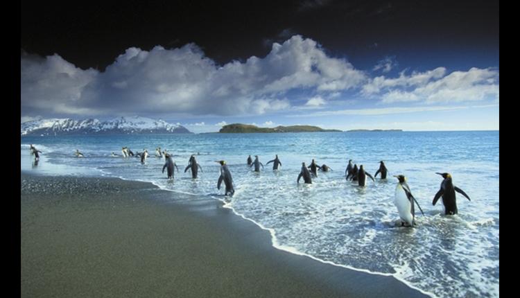 Pingüinos en el Polo Norte