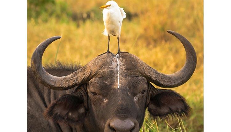 Pájaro sobre animal