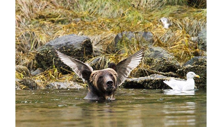 Oso en el agua