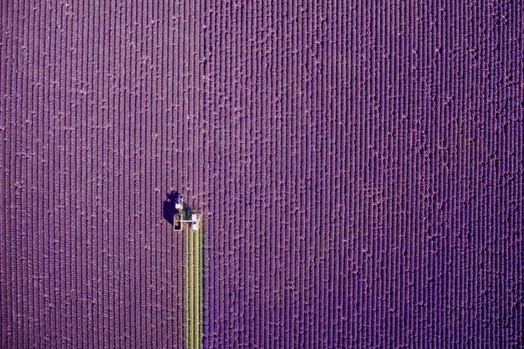 Provence, summer trim- dronestagr