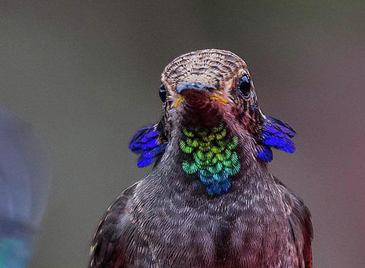 Fotografías que capturan un colibrí