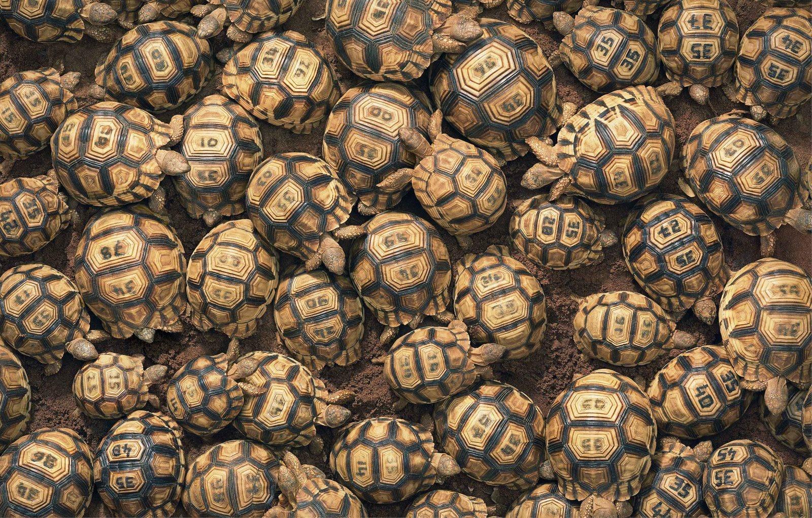 Tim Flach realizó su proyecto Endangered donde retrata animales en peligro de extinción