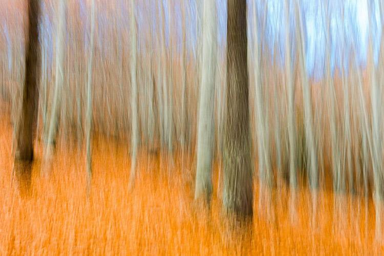 bosque anaranjado