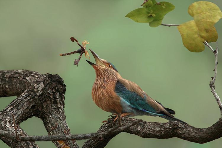Pájaro intentando comer un escorpión