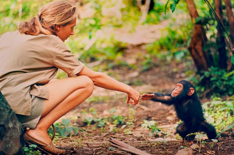 Fotografía de primates.